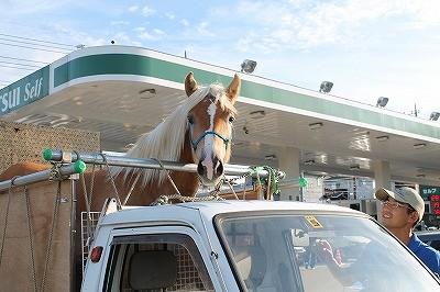 馬とガソリンスタンドに行ってきました