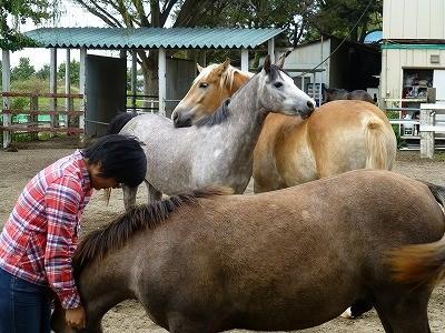 馬と仲良し風景