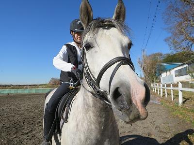 馬はいつも優しい