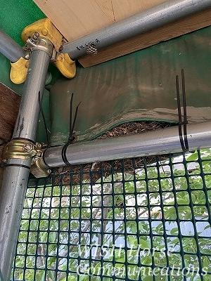 馬運車に鳥の巣