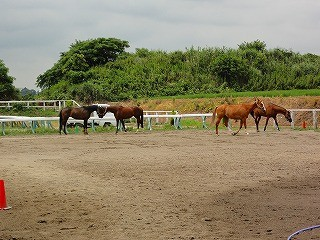 放牧を見て馬の会話を覚えよう