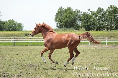 乗馬の生産育成