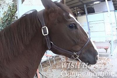 乗馬の再調教