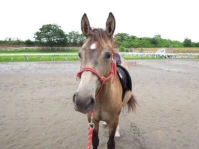馬の調教は毎日の積み重ね