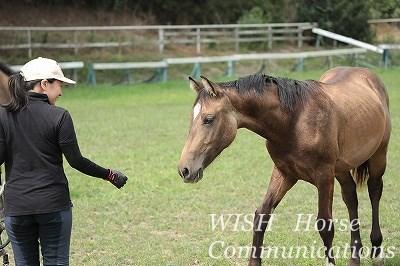 馬に好かれる乗馬