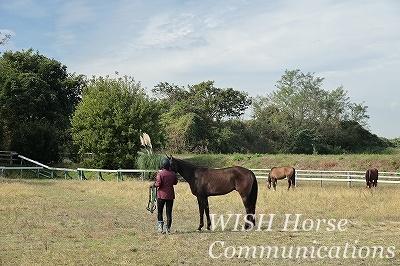 愛する馬と