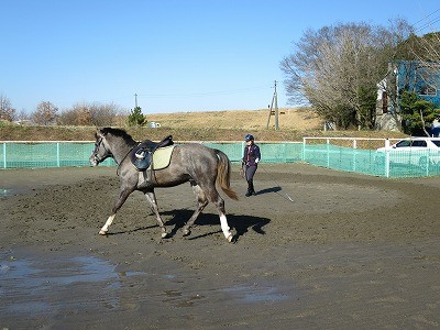 馬と一緒にダンス