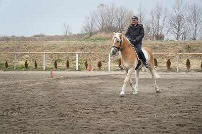 馬の教育 育てるの大好き!