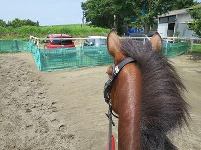 新馬調教 何事も練習練習