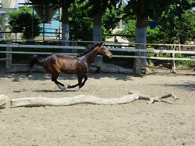 健康でよく調教された馬、それは一人一人の気持ちの集大成