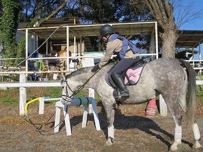 乗馬練習用木馬