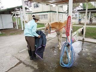 馬にも寒い時には服を着せてあげます