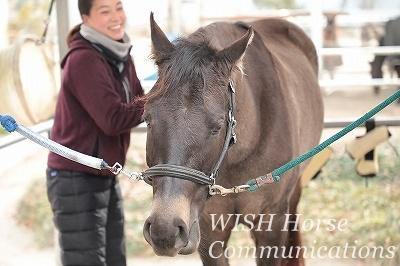 馬の表情が違う乗馬
