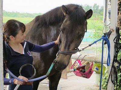 馬との優しい会話
