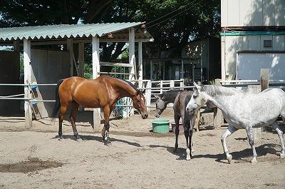 馬の表情をたくさん見てください