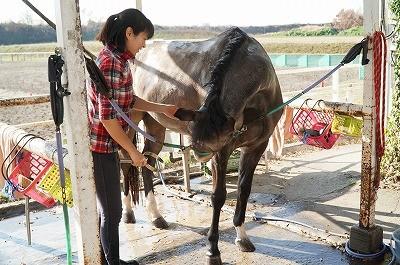 馬の気持ちを知る方法