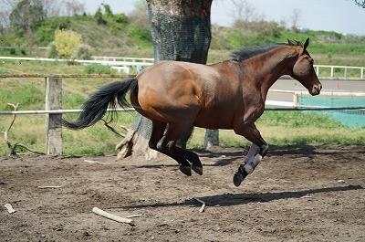 いきいきと走る馬