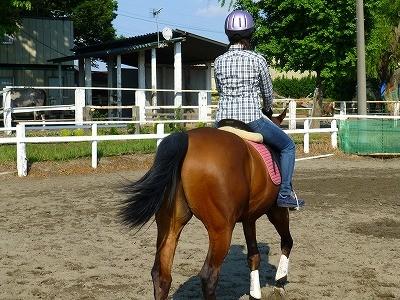 馬との付き合い方