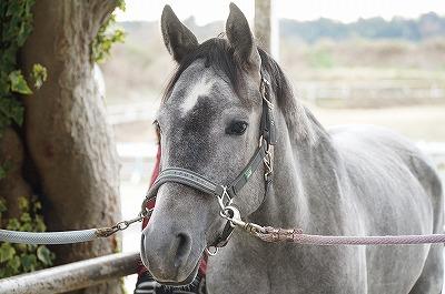 馬の表情と瞳には信頼が表れる