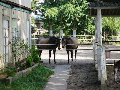 馬たちの仲良し話