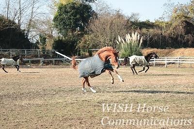 健康な馬で元気な乗馬