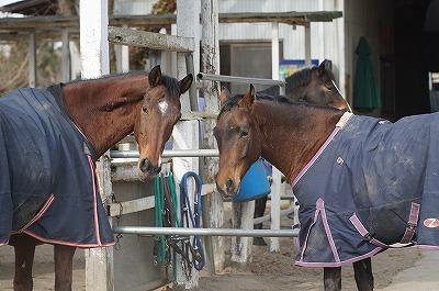 馬とのコミュニケーションはとても楽しい!
