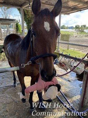 馬のこころ
