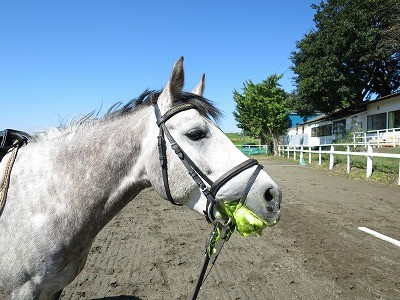 満足そうな馬の顔