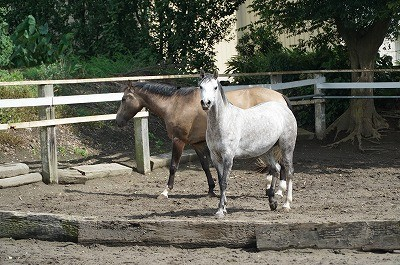 馬は身体全体で語る