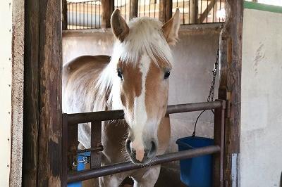 ウィッシュの馬