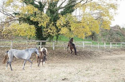 黄葉の中の馬達
