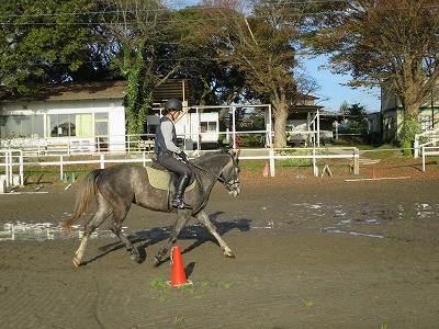 乗馬は素晴らしいスポーツ