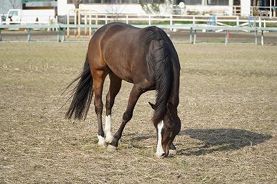 自然な馬の姿