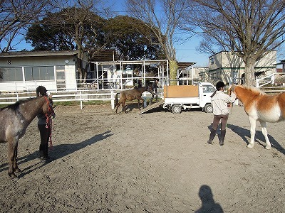 馬を育てるコツ