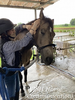 馬のうっとりした表情