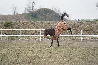 はしゃぐ馬