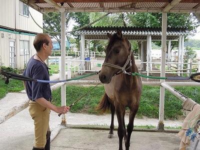 馬のスティックトレーニング