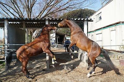 これが本来の馬