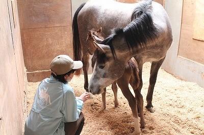 母馬との絆