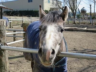 可愛い馬が待っている