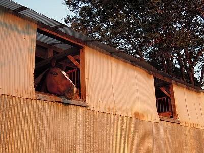 乗馬クラブの夕焼け