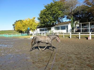 乗馬クラブの調教風景