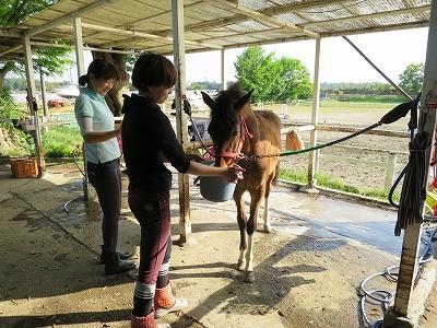 新馬調教 どの馬にも通用するやり方を覚えること