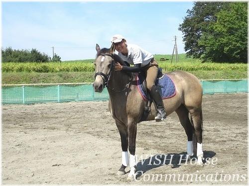 千葉県柏エリアの乗馬クラブウィッシュホースコミュニケーションズの体験乗馬