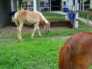 馬の調教と馬育て