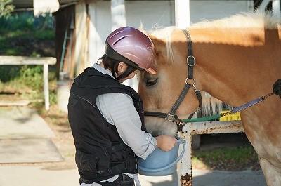 はじめての乗馬体験