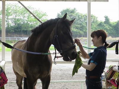 全日本馬場馬術大会出場馬?!