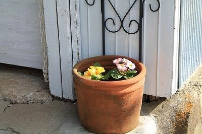 乗馬クラブに新しい花を植えました