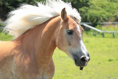 馬の喉の秘密