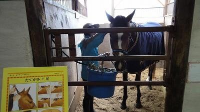馬のたてがみ梳き